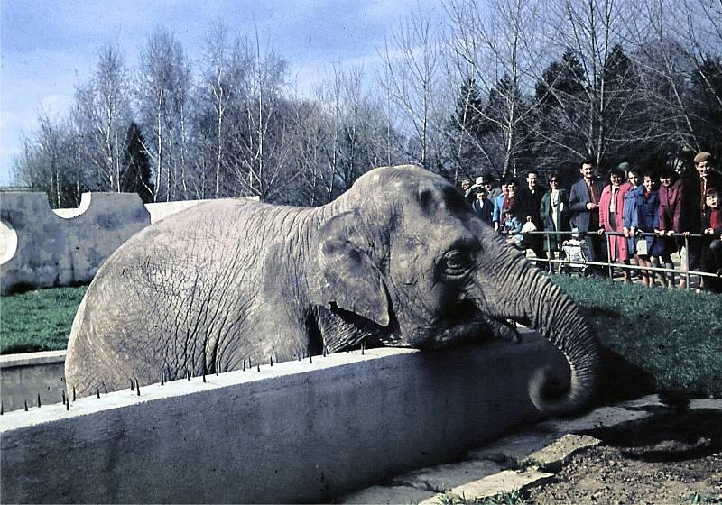 Slon indický ve starém pavilonu.