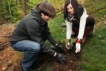 I SÁZENÍ stromků má svá pravidla. Musí se vykopat poměrně hluboká díra, sazenice se do ní vloží a okolí ušlape.