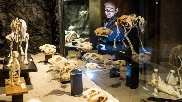 V areálu zoologické zahrady ve Dvoře Králové nad Labem byla 13. března 2018 otevřena nová expozice Umění pod kůží aneb krása kosti.