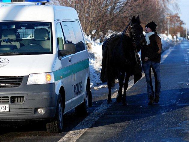 Splašeného jezdeckého koně museli odchytit strážníci městské policie. 30.1.2010