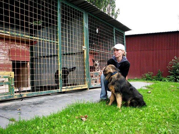 V kutnohorském útulku psi nestrádají, chybí však dostatečné zázemí pro ošetřovatele.