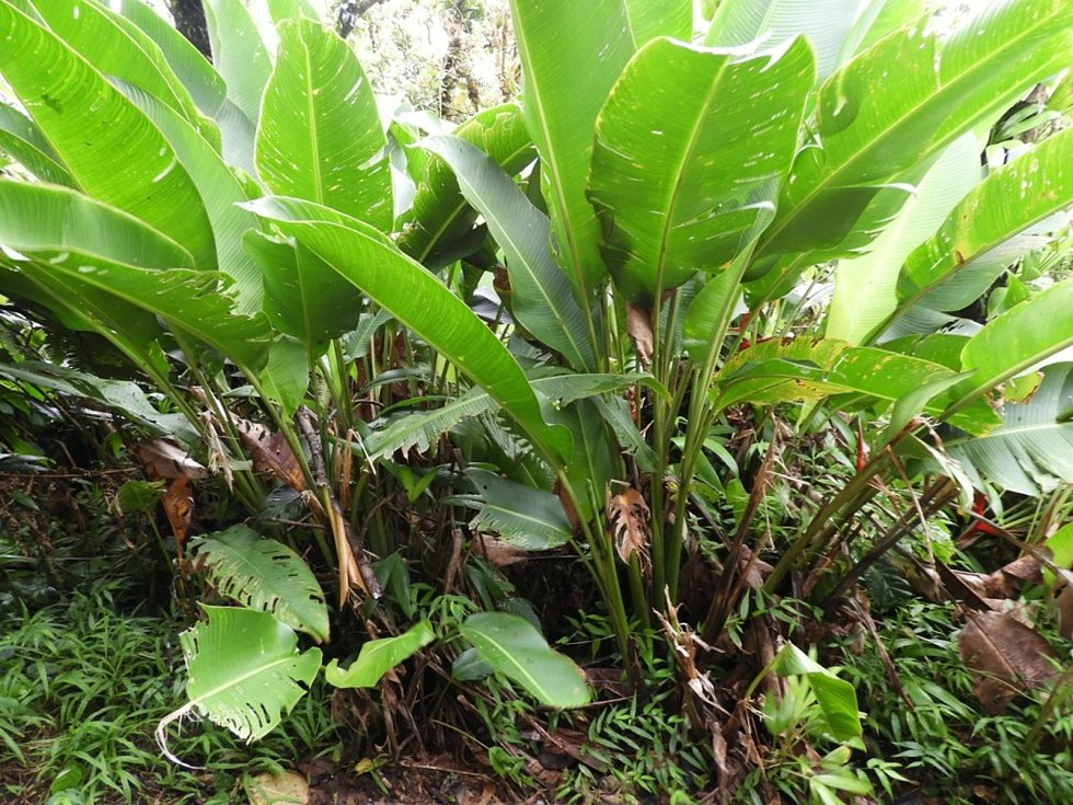 Karibská flóra na ostrově Guadeloupe.
