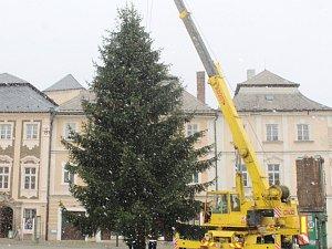 Vánoční strom v Kutné Hoře