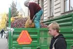 Děti ze ZŠ Žižkov sbíraly kaštany