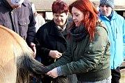 Z masopustního reje na statku sdružení Dítě a kůň v Miskovicích.