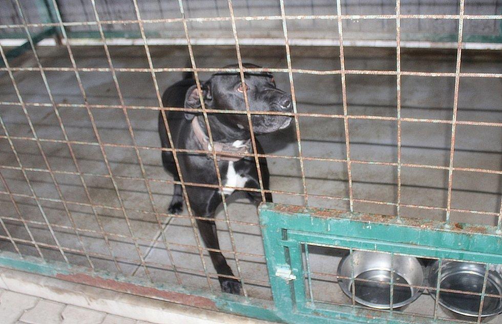 Do útulku chodí psy venčit také dobrovolníci.