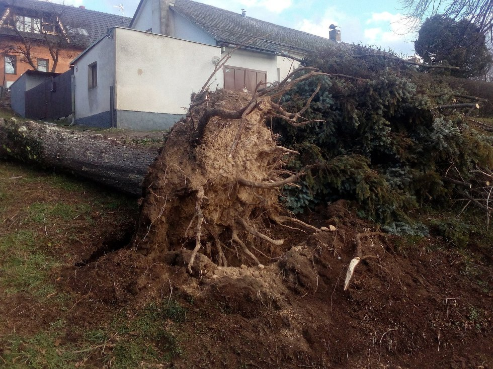 """Další pořádný """"macek"""" lehl v důsledku silného větru k zemi v pondělí 10. února 2020 po 14. hodině na Kaňku. V průběhu odpoledne jej odstraňovali pracovníci Technických služeb Kutná Hora."""