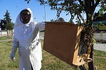 Odstranění včelího roje