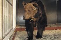 Medvěd v Národním cirkuse originál Berousek.