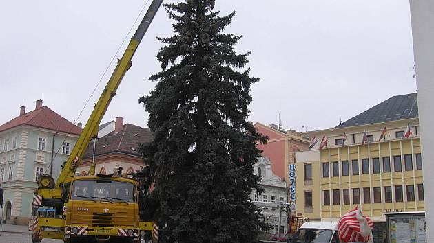 Strříbrný smrk od Václava Suka ze Záboří nad Labem.