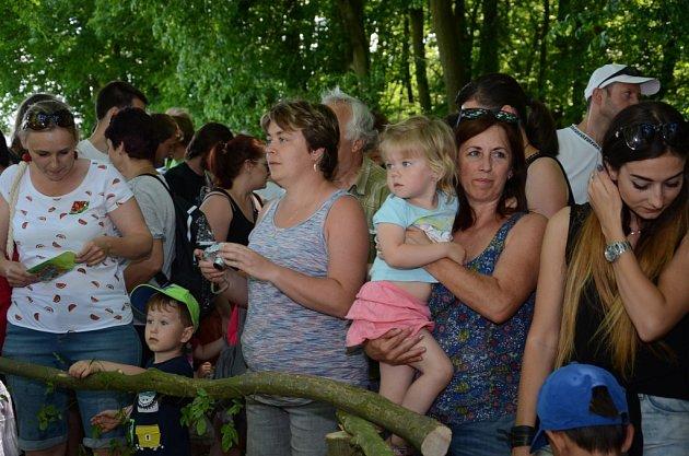 Pohádkový les okolo zříceniny hradu Sion opět přilákal davy