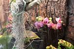 Výstava Epifyty- rostliny vzdušných zahrad na zámku Kačina.