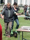 Oblastní výstava psů v parku zámku Kačina 31. května 2014