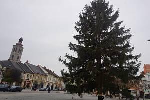 Vánoční strom přijel do Kutné Hory 15. listopadu
