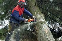 Lesníci měli po vichřici spoustu práce.