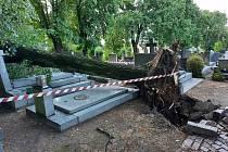 Následky bouřky v noci na čtvrtek 24. června 2021 na hřbitově Všech svatých v Kutné Hoře.
