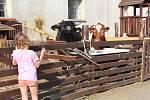 Čarodějnice nanečisto na statku sdružení pro hipoterapii Dítě a kůň v Miskovicích