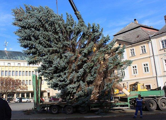 Vánoční strom loni přivezli na Palackého náměstí v Kutné Hoře ve čtvrtek 23. listopadu.