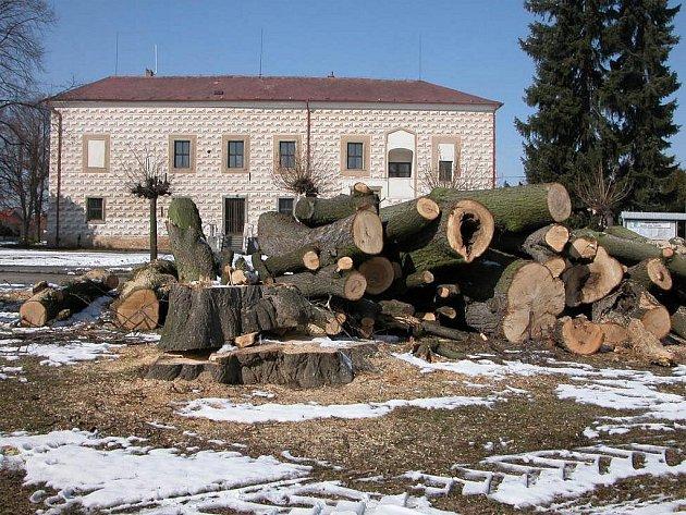 Pokácené stromy na návsi v Suchdole.