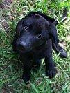 Hořčice of Black Dog Farm alias Pivko