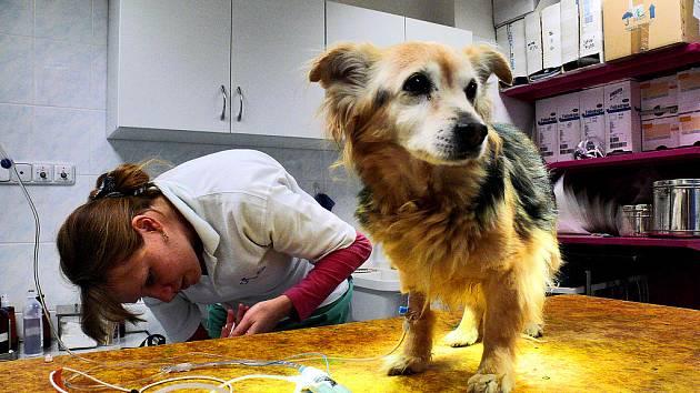 Biseptol u veterináře vyjde vašeho miláčka draho