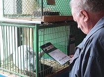 Výstava králíků a holubů v Hostovlicích