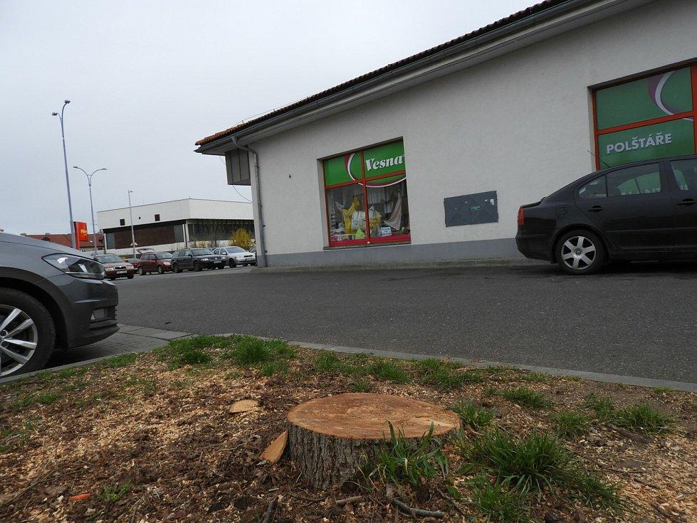 Skautská lípa v Čáslavi byla pokácena.