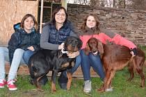 Oslavy nového roku patří pro psy mezi velice stresující období