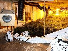 Nelegální pěstírna marihuany v Malešově.  22.3.2013