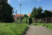 Neposekaná tráva v blízkosti čáslavského kina.