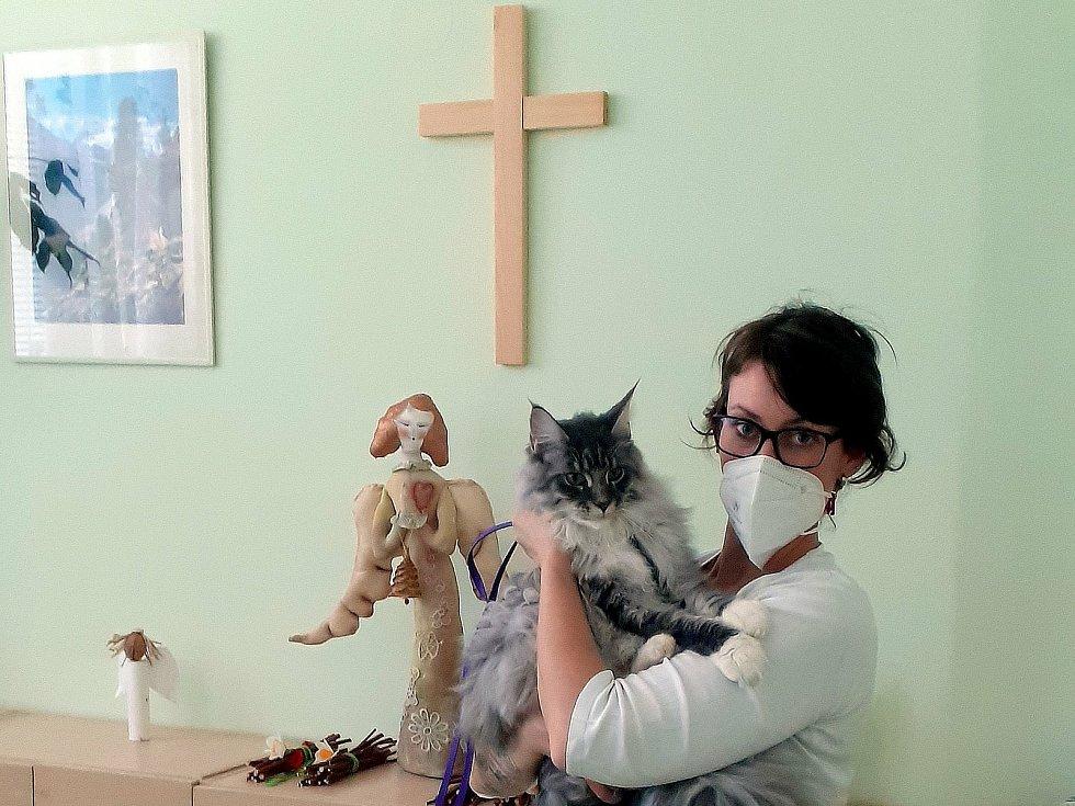 Pacienty na oddělení paliativní péče v kutnohorské nemocnici chodí rozptylovat Henrry. Roční Mainský mývalí kocour je pro ně kamarádem, terapeutem i zprostředkovatel  vzpomínek na doby dávno minulé.