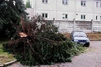 Jen těsně minul padající strom zaparkovaný automobil před kasárnami v Kutné Hoře.
