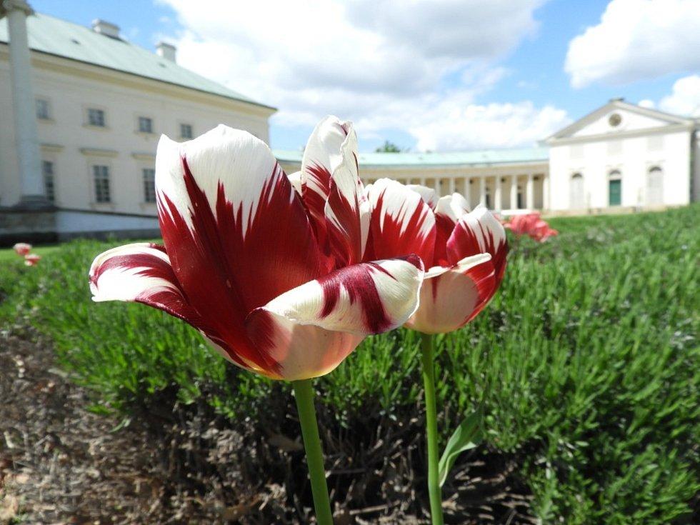 Rozkvetlá je i zahrada kačinského zámku.