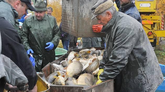 Výlov rybníka v Ostašově přilákal spoustu diváků.