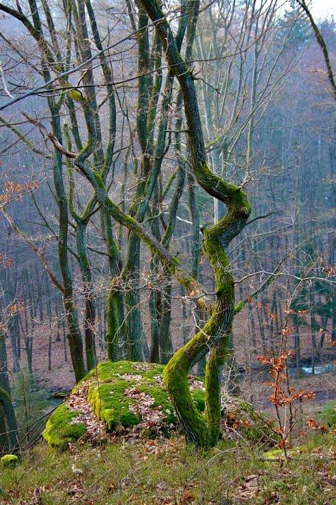 Les na Sionu.