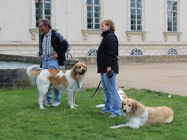 Výstava psů na zámku Kačina