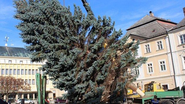 Vánoční strom přivezli na Palackého náměstí v Kutné Hoře ve čtvrtek 23. listopadu.
