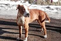 Bull azyl Čáslav ukončil svoji činnost, policie prošetřuje možné týrání psů.