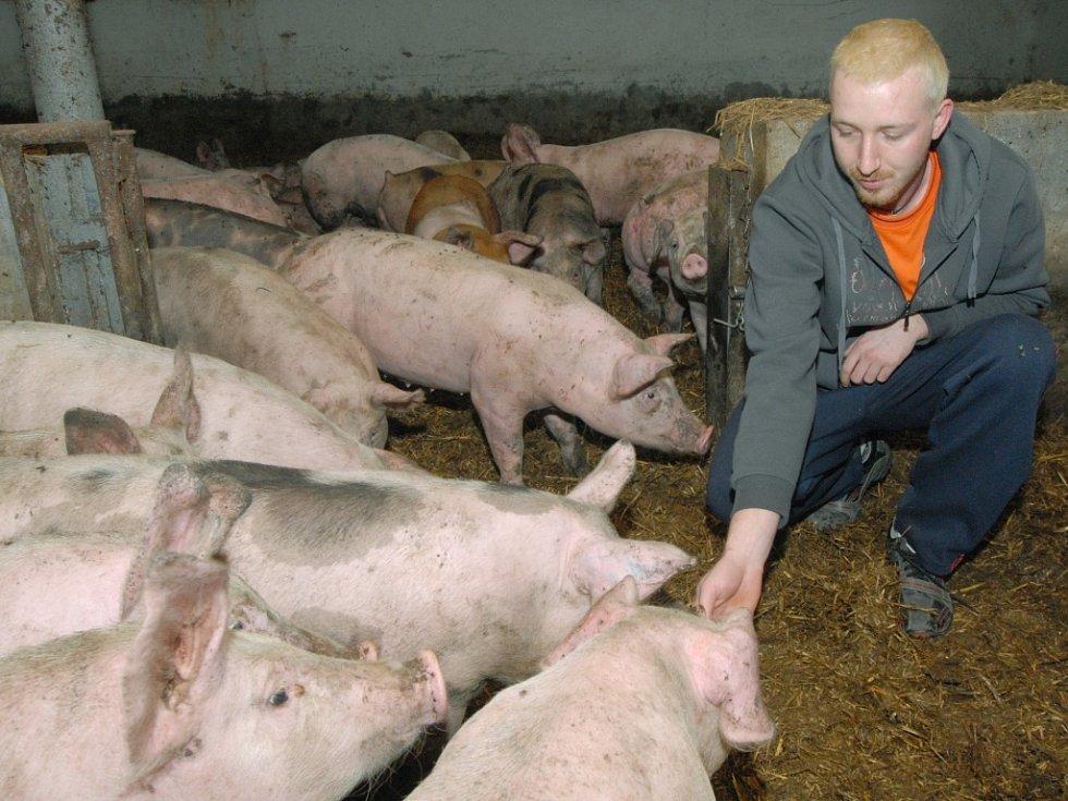 Nejtěžší dopad bude vládní opatření mít podle předsedy agrární komory Jana Veleby na chovatele prasat. Ilustrační foto.