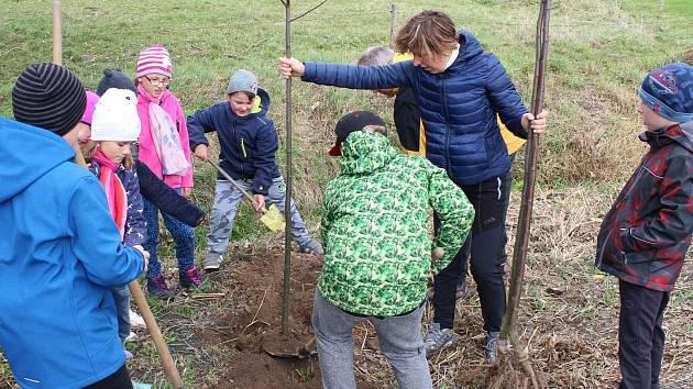 Sázení stromků - ilustrační foto.