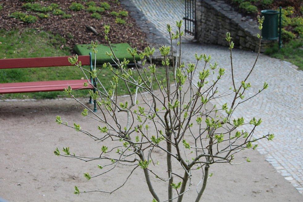 Z jarní procházky po Kutné Hoře.
