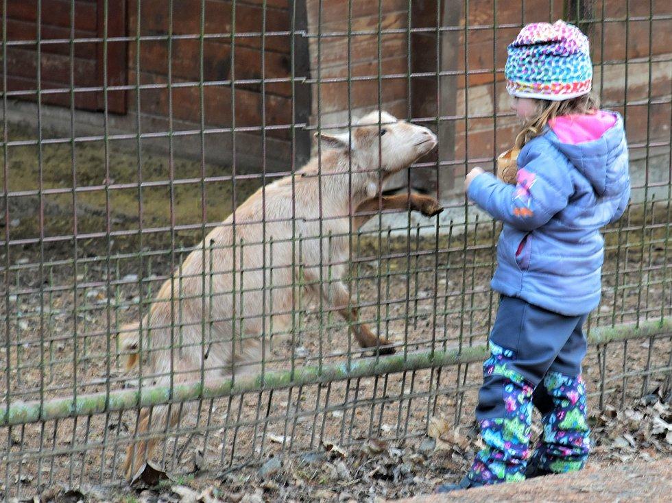 Z návštěvy zoologické zahrady.