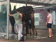 Cirkusový slon v samoobslužné myčce aut v Kutné Hoře.
