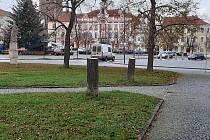 Pokácené lípy na čáslavském Žižkově náměstí.