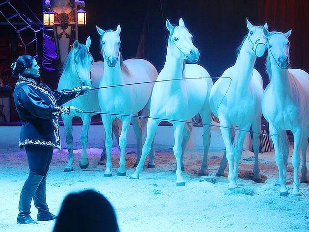 Cirkus Berousek v Kutné Hoře