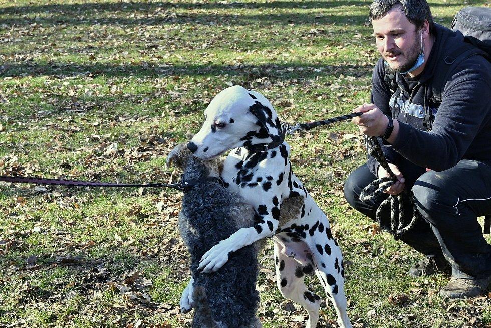 V kutnohorském Malíně se nachází bílý rodinný dům se zahradou. Na plotě je cedulka s nápisem Pejskoviště. Vojtěch Mejstřík, který zde žije, se věnuje výchově a převýchově psů.