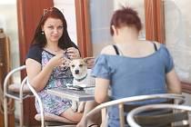 Otevřené zahrádky restaurací v Kutné Hoře během loňského uvolnění. V současné době restaurace na opětovné otevření čekají…