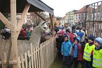 Dopoledne na vánočních trzích v Čáslavi