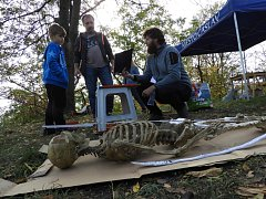 Archeologické hrátky na Hrádku v Čáslavi.