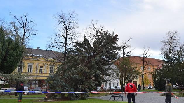 Čáslav přišla o vánoční strom.